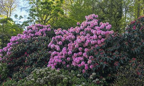 Jardins-Bretagne3-min
