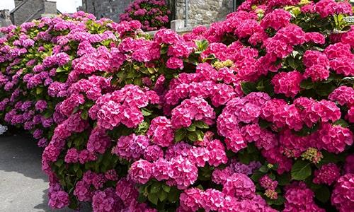 Jardins-Bretagne5-min