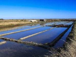salt-marsh-2675787_1280